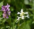 Flora (39722995171).jpg