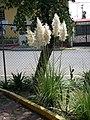 Flores en el Parque Vista Hermosa - panoramio.jpg