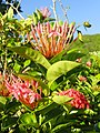Flower, Tumon Bay, Guam - DSC00840.JPG