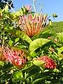 Flower, Tumon Bay, Guam - DSC00840.JPG