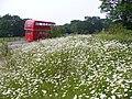 Flower Bank, Newlands Corner - geograph.org.uk - 460438.jpg