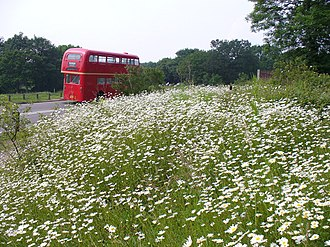 Newlands Corner - Image: Flower Bank, Newlands Corner geograph.org.uk 460438