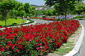 Flower Carpet RED in the landscape.JPG