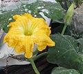 Flower puusani.jpg