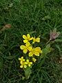 Flowers61.jpg