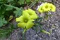 Flowers - Israel (8).jpg