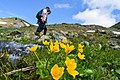 Flowers of Jablanica Mountain, Struga 08.jpg
