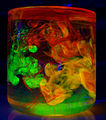 Fluorescense mix.JPG