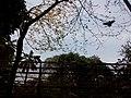 Flying birds in Bolda garden.jpg