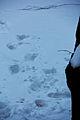 Fodspor i sneen.jpg