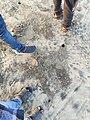 Foot prints.jpg