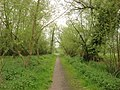 Footpath, Cornard Riverside Walk - geograph.org.uk - 1021645.jpg