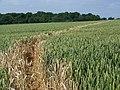 Footpath near Grittleton - geograph.org.uk - 1381540.jpg