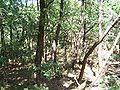 Forêt de la Coubre 001.jpg