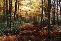 Forest-trail-north-fork-mountain - West Virginia - ForestWander.jpg