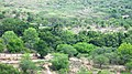 Forest View From Watch Tower @ Chinnar wildlife Sanctuary - panoramio.jpg