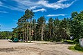 Forest in Minsk (June 2020) 3.jpg