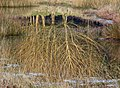 Forest pond - geograph.org.uk - 684830.jpg