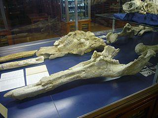 <i>Tetralophodon</i> genus of mammals (fossil)