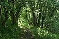 Fowey, woodland path to Coombe Hawne - geograph.org.uk - 1402976.jpg
