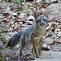 Fox (42992560841).jpg