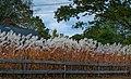 Freeport Fence (15272768354).jpg