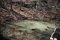 Frog Pond (13170932084).jpg