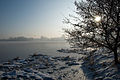 Frozen lake with tree (2152177569).jpg