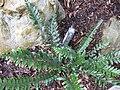 Gardenology.org-IMG 2476 rbgs11jan.jpg