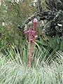 Gardenology.org-IMG 7400 hunt09jun.jpg