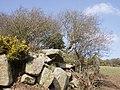 Gate and gorse - geograph.org.uk - 139073.jpg