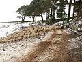 Gathered in sheep - geograph.org.uk - 334514.jpg