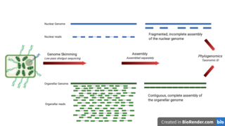 Genome skimming Method of genome sequencing