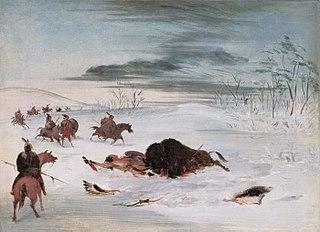 Dying Buffalo Bull in a Snowdrift