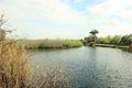 Gfp-florida-everglades-national-park-anhingas-path.jpg