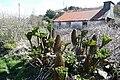 Giant rhubarb^ - geograph.org.uk - 776117.jpg