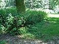Gietijzeren weidehekken in Park Zypendaal.JPG