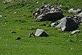 Giochi di marmotte (19655755772).jpg