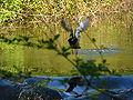 Glatt - Kanal - Wallisellen IMG 6810.JPG