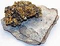 Gold on quartz (Roata Mine, Cavnic, Romania) (16414295434).jpg