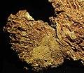 Gold vein stockwork in limonite (Gold Flake Vein, Farncomb Hill, near Breckenridge, Colorado, USA) 13 (17078072722).jpg