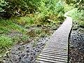 Gower Hey Wood - geograph.org.uk - 1481332.jpg