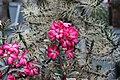 "Gradina Botanica ""Vasile Fati"" (4656622585).jpg"