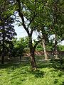Gradski Park-Skopje (128).JPG