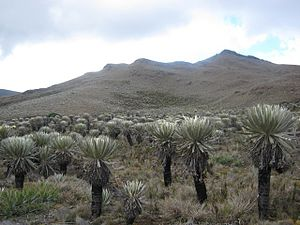 Chaquén - Dry plains (páramo) in the highlands punishment of Tintoa