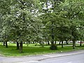 Grassed Square Queen Victoria Road - geograph.org.uk - 477917.jpg