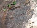 Gravuras rupestres de Mazouco 1.jpg