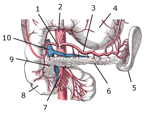 Páncreas - Wikiwand