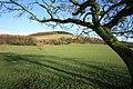 Grazing Land - geograph.org.uk - 1178751.jpg