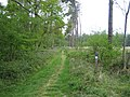 Great Ridge wood near Chicklade - geograph.org.uk - 465121.jpg
